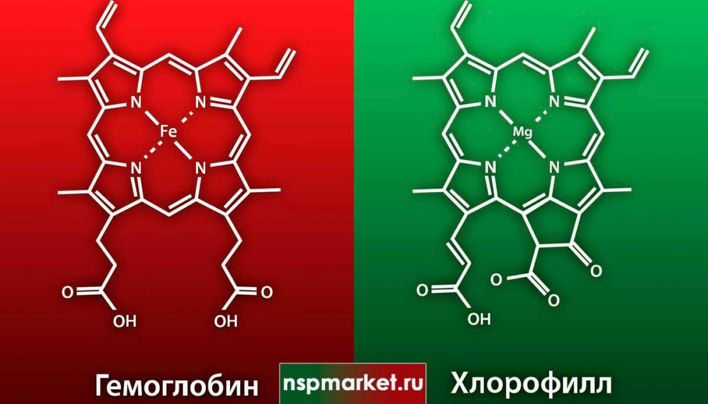 Связь хлорофилла и гемоглобина. Дефицит железа