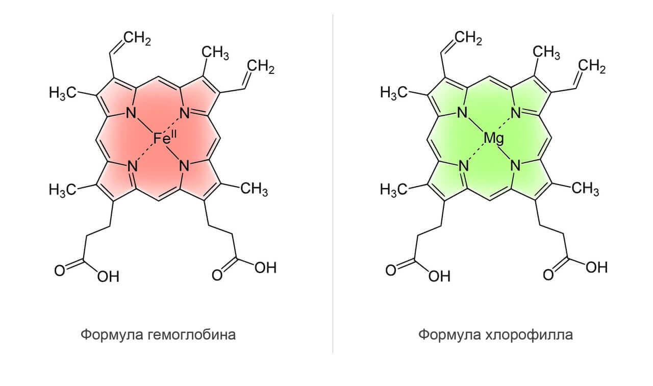 сходство хлорофилла и гемоглобина